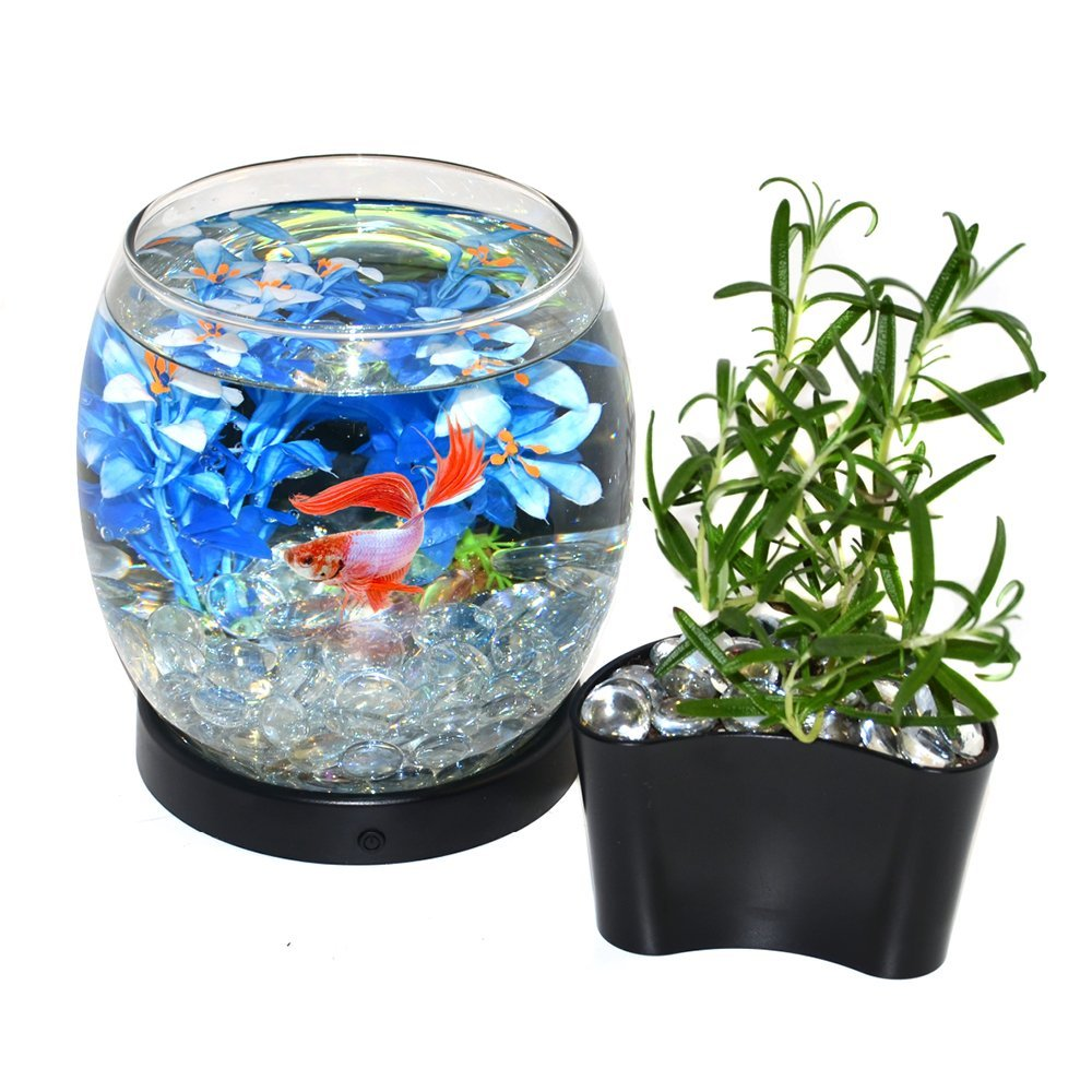 how to clean a fish tank for the first time